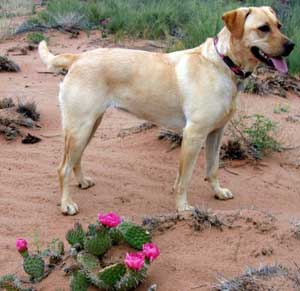 travel with dog in taos